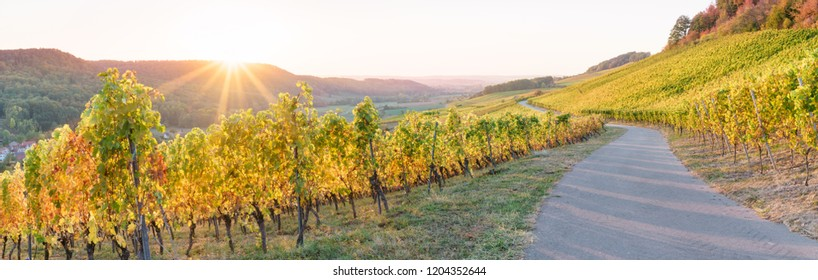 Panorama vineyard in autumn