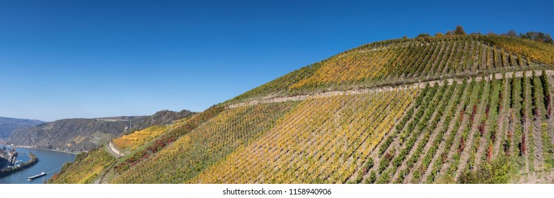 Panorama of a Vineyard over the Rhine valley, Germany