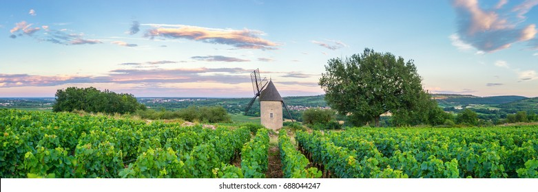 Panorama of Vineyard with Windmill - Santenay, France