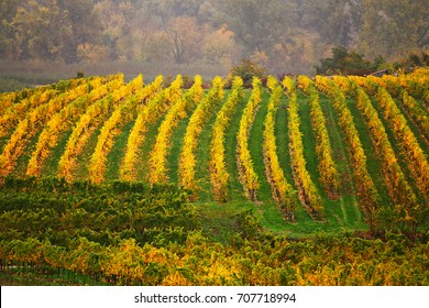 Panorama of Wachau valley. Colorful autumn in vine yards, Austria. Hills of Lower Austria