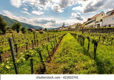 Panorama of Wachau valley, World Heritage Site (UNESCO)