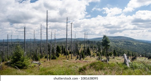 panorama of wild Bayerischer Wald and Sumava mountains with hills, meadows, forest devastated by bark beetle infestation from hiking trail bellow Groseer Rachel hill in Bayerischer Wald mountains