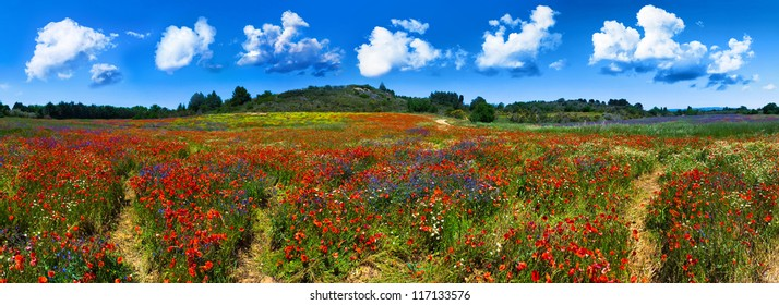 Panorama of a wild red, blue and yellow flower field near Gruissan (Narbonne), France