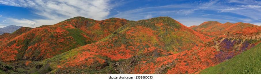 Panorama of the Wildflower Covered Hills of Lake Elsinore Califo
