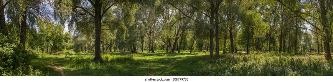 Panorama Wood