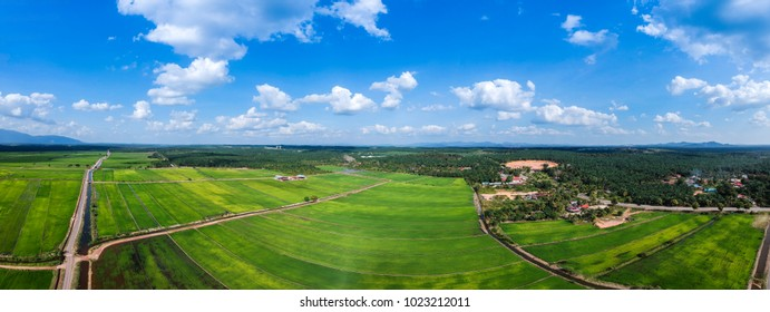 Panoramic aerial scenery of the famous paddy field during the growing season of rice started in Bukit Gambir, Johor, Malaysia