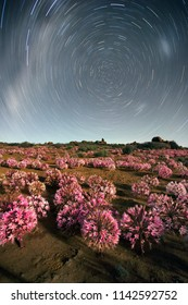 Panoramic Astro photography landscape images of the March flowers (Brunsvigia Bosmaniae) in Nieuwoudtville in the Northern Cape of South Africa
