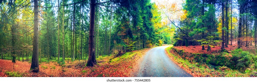 Panoramic autumn landscape with forest road. Fall nature background at sunrise