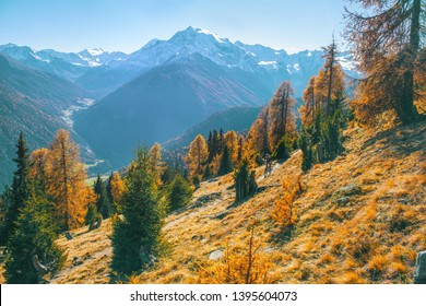 Panoramic autumn scene of the Ortlergruppe in Val Venosta, Alto Adige. Mountainbiking at the Stelvio National Park the trail is called Goldsee Trail. Passo allo Stelvio
