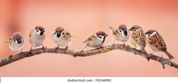 panoramic  beautiful little Christmas birds sitting on a branch in the garden and funny looking right in the snow