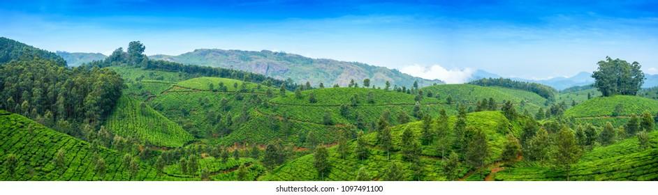 Panoramic beautiful tea plantations in hills near Munnar, Kerala, India.
