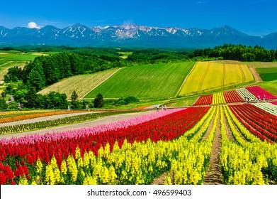 Panoramic colorful flower field and blue sky in Shikisai-no-oka, Biei, Hokkaido, Japan