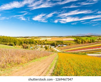 Panoramic colorful flower field in Shikisai-no-oka, Biei, Hokkaido, Japan. Vivid flower streak pattern attracts visitors. It is a very popular spot that can not be missed if sightseeing in Hokkaido.