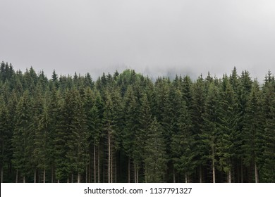 Panoramic coniferous forest. Firs, larches. Fog and low clouds. Nostalgic look. Styria mountains, Austria