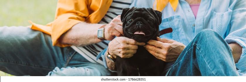 Panoramic crop of senior couple petting pug dog in park