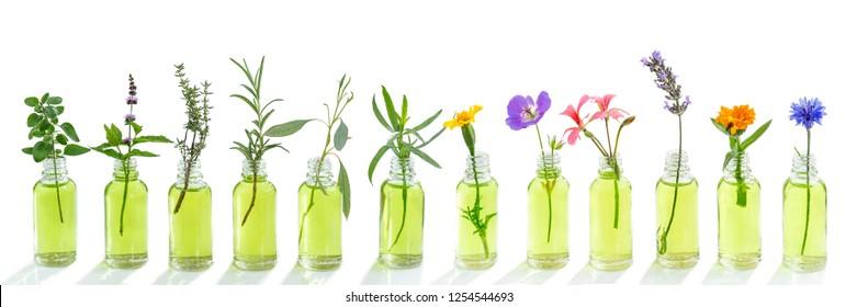 panoramic essential oil flowers cornflower, eucalyptus, tarragon, geranium, geranium, lavender, mint carnation turkey oregano rosemary marigolds thyme