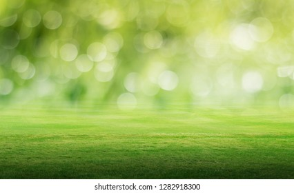 Panoramic field landscape. Summer background