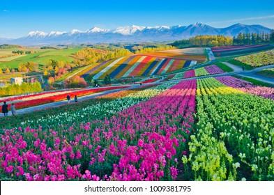 Panoramic Flower Gardens Shikisai hill in Biei, Japan