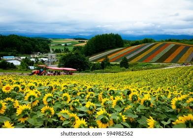 Panoramic flower gardens of Shikisai-no-oka in Biei, Japan.
