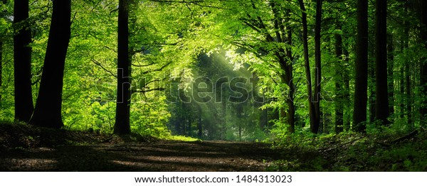 Panoramic peaceful green scenery  wall mural with a natural archway