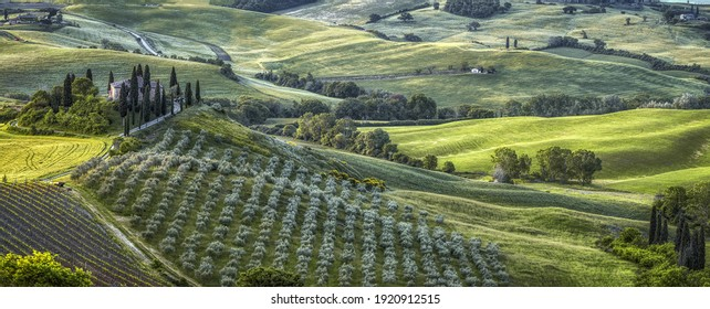 Panoramic green landscape with plantations, trees and winding patgs in greenery in central Italy, Tuscany region