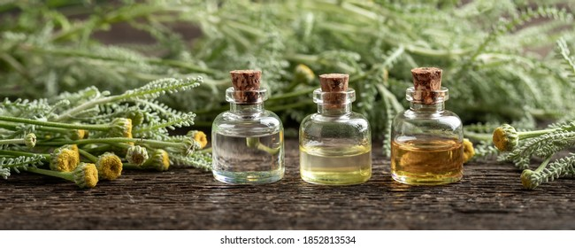Panoramic header of three essential oil bottles with fresh blooming Santolina chamaecyparissus plant - Shutterstock ID 1852813534