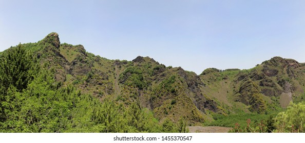 Panoramic image of green trees on tall mountain