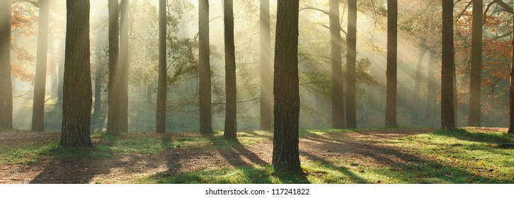 Panoramic image of morning forest with fantastic sun beams. Can be used as web site header