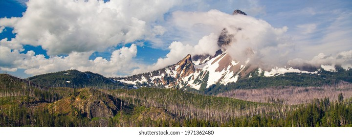 Panoramic image of Mount Washington partially obscured with a cloud, dead trees from the B and B Complex forest fire are in the foreground, near Sisters, Oregon