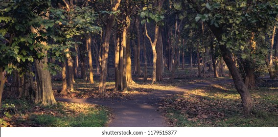 Panoramic image of a path diverging into two in a forested area