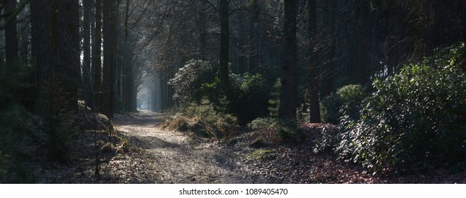 panoramic image of a path in the forest