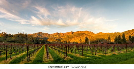 Panoramic image of sunset lights strike the mountains behind a vineyard in partial shadow. . Wispy clouds are in a blue sky above the mountains. Trees are on both sides of the picture.