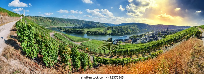 Panoramic landscape with autumn vineyards. Mosel, Germany