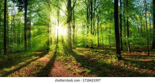 Panoramic landscape: beautiful rays of sunlight shining through the vibrant lush green foliage and creating a dynamic scenery of light and shadow in a forest clearing