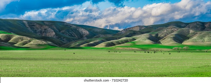 Panoramic landscape of central California agricultural countryside with green hills (foothills), cloudy skies and a farm with cows in a pasture.