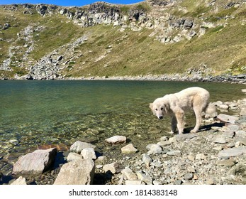 Panoramic landscape on Golemo Ezero(Big lake) on Baba Mountain, National park Pelister- Pelisterski Oci - perfect water reflection on rocky mountain reflected in the lake and white dog - Shutterstock ID 1814383148