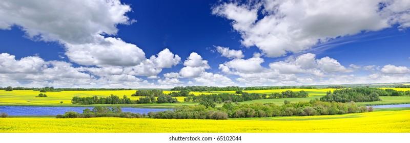 Panoramic landscape prairie view of canola field and lake in Saskatchewan, Canada