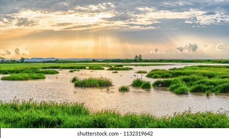 Panoramic landscape scenery of marsh wetland full of grass with heron looking for fish during sunset at Thalaynoi, Phatthalung, Thailand