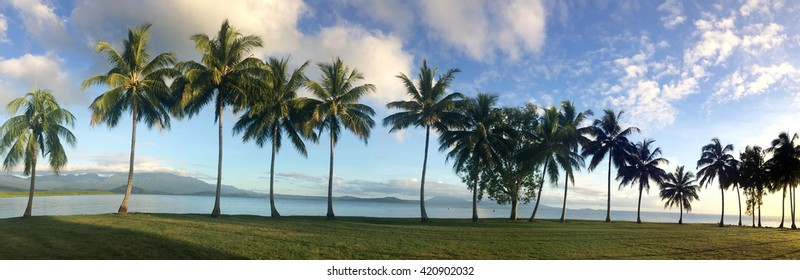 Panoramic landscape view of a row of palm trees on the coast of Port Douglas in the tropical north of  Queensland,  Australia