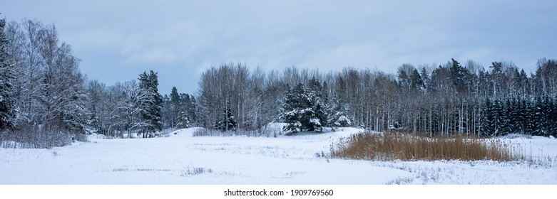 Panoramic landscape view of row of trees in snowy winter forest. Silhouettes of bare trees and evergreens against cold cloudy sky. Cool gray black white monochrome shades of winter nature. Header.