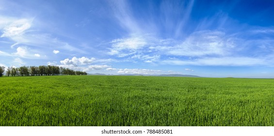 Panoramic landscape. Young flax grows on a spring field. In the distance are small mountains. Republic of Crimea.