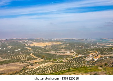 Panoramic of Montilla countryside among vineyards, olive groves, Cordoba, Andalusia, Spain