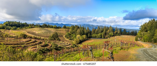 A panoramic of Napa valley vineyards late in the afternoon with fluffy white clouds, trees and a red barn.