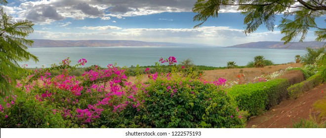 Panoramic Nature Landscape - From The Mount of Beatitudes beautiful flowers with Background view of The Sea of Galilee in Israel.