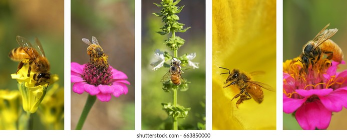 Panoramic nature montage banner with set of bee photo elements in white frame