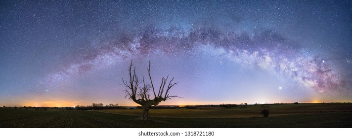 Panoramic Night astrophotography: View of Milky Way arch over an old oak in Guadalajara countryside, Spain