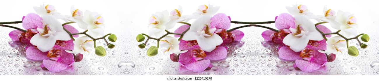 Panoramic Orchid Flover