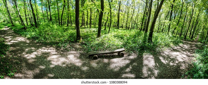 Panoramic photo of the spring forest. Hiking theme. Natural scene.