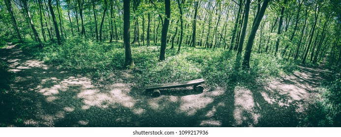 Panoramic photo of the spring forest. Hiking theme. Natural scene. Analog photo filter with scratches.