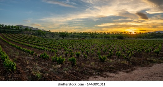 Panoramic photo of a vineyard in spring during a stormy day sun rise with grey clouds on the sky - Image